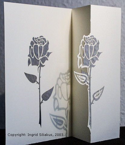 Rose by Ingrid Siliakus